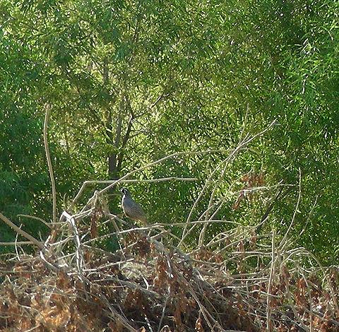 quailaug09