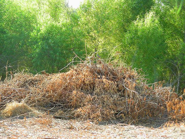 quailinbrush