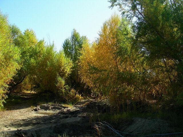 goldengrove3