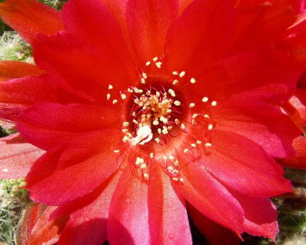 redcactus4 07