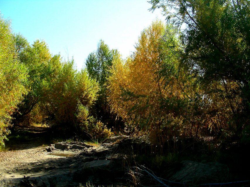 goldengrovenew
