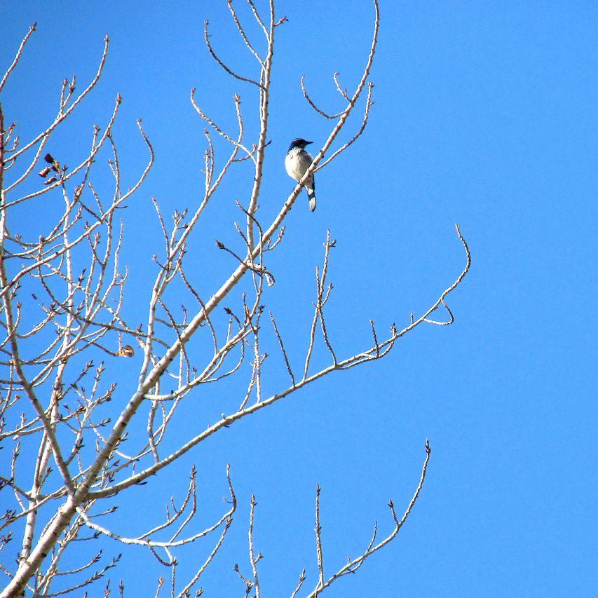 birdintree2