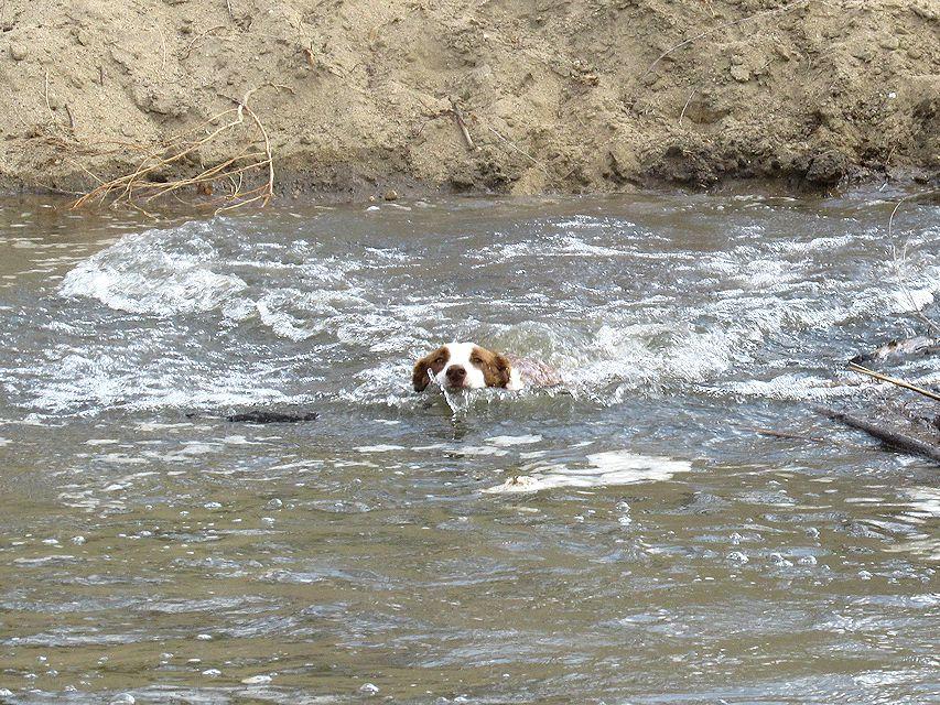 waterdogs3