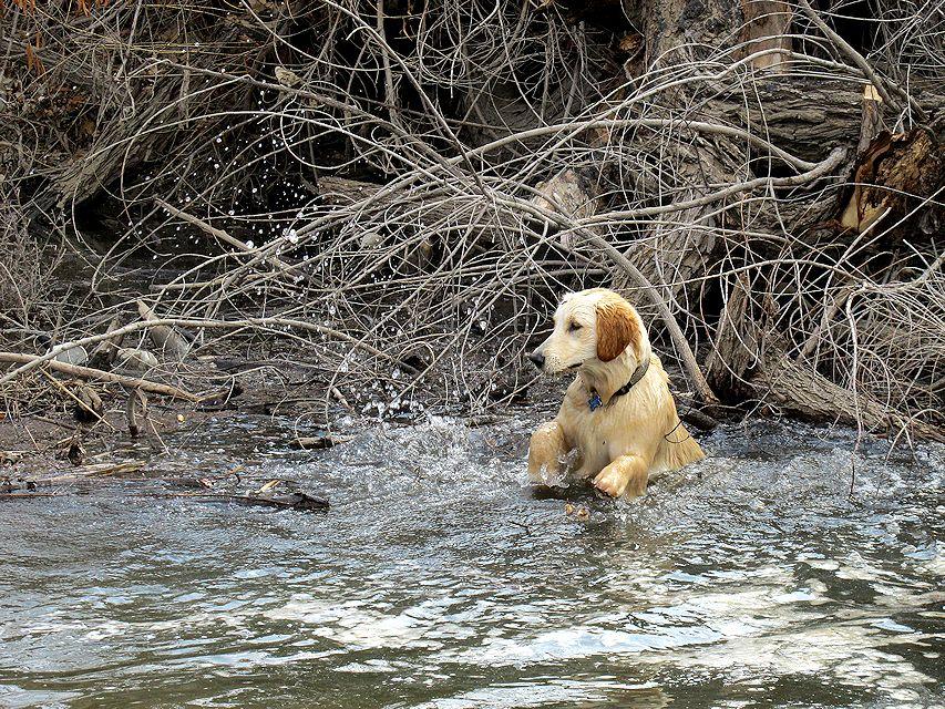 waterdogs4