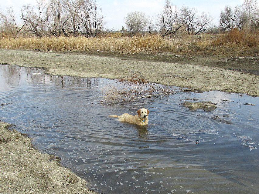 waterdogs6