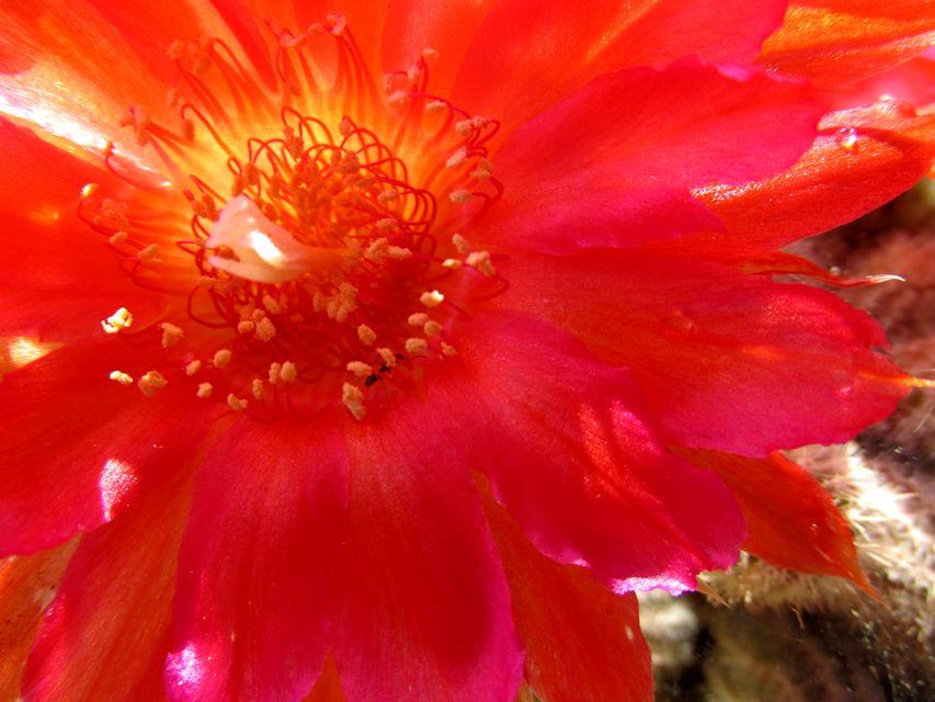 cactusflowerclose