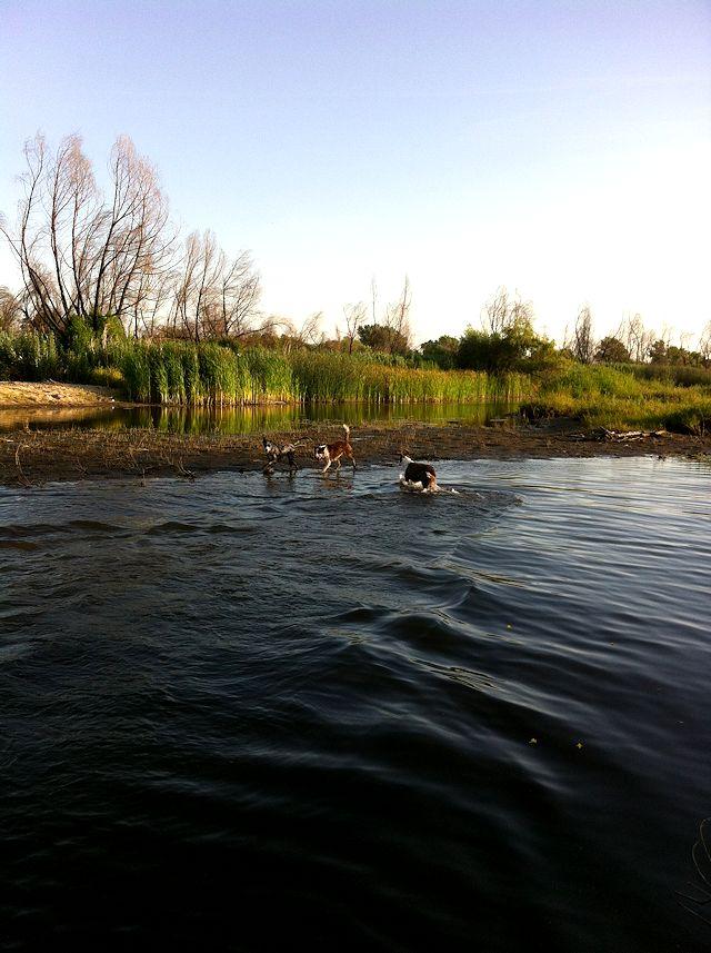 afternoonriver3