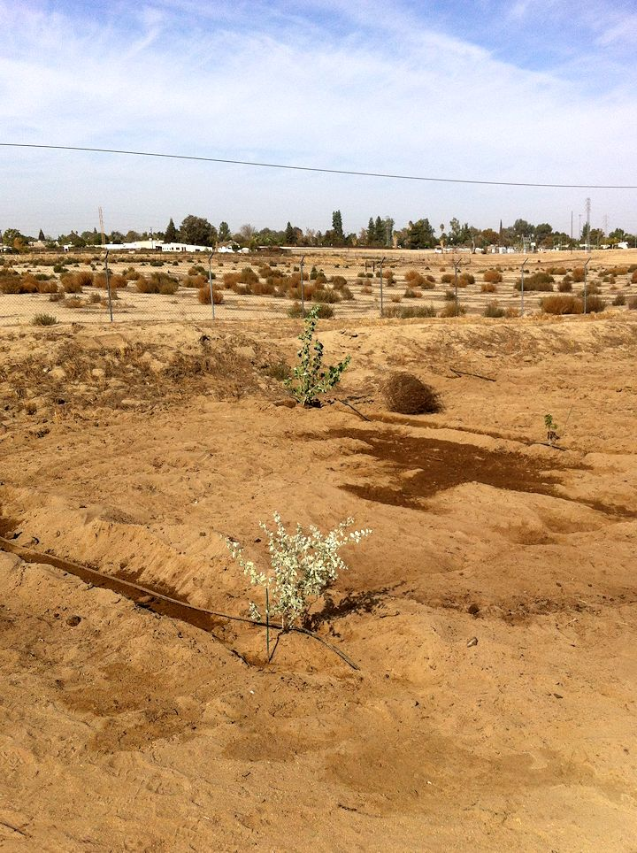 plantings1