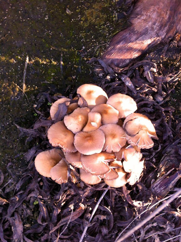 mushroom1 edit