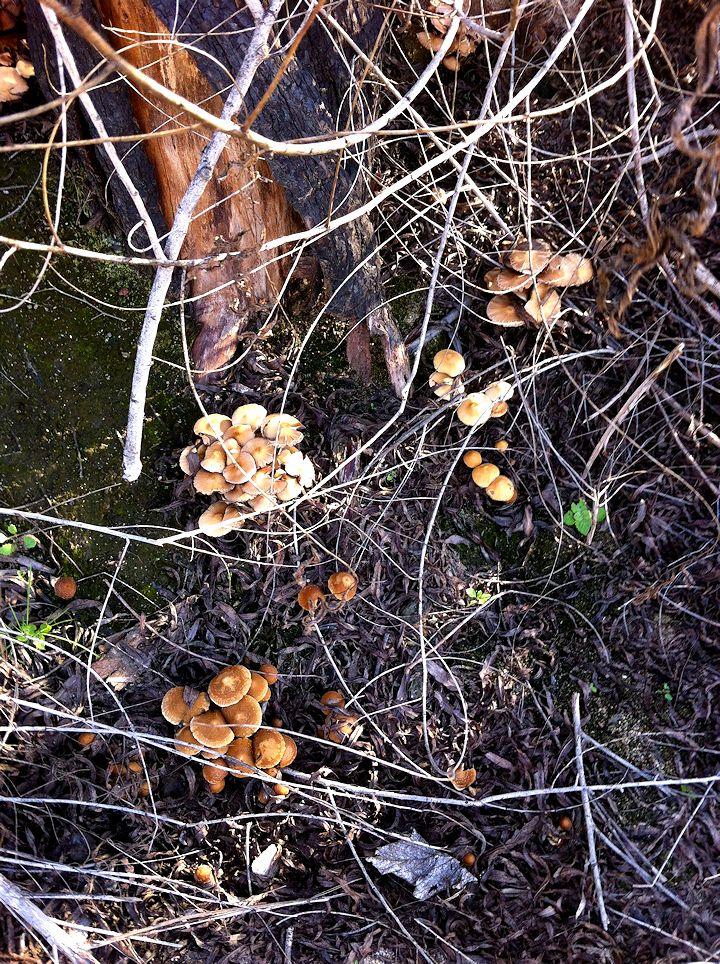 mushroom3 edit