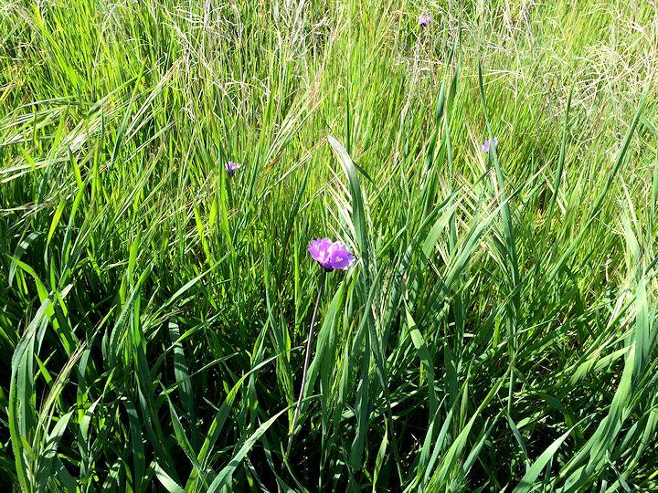 wildflower 12