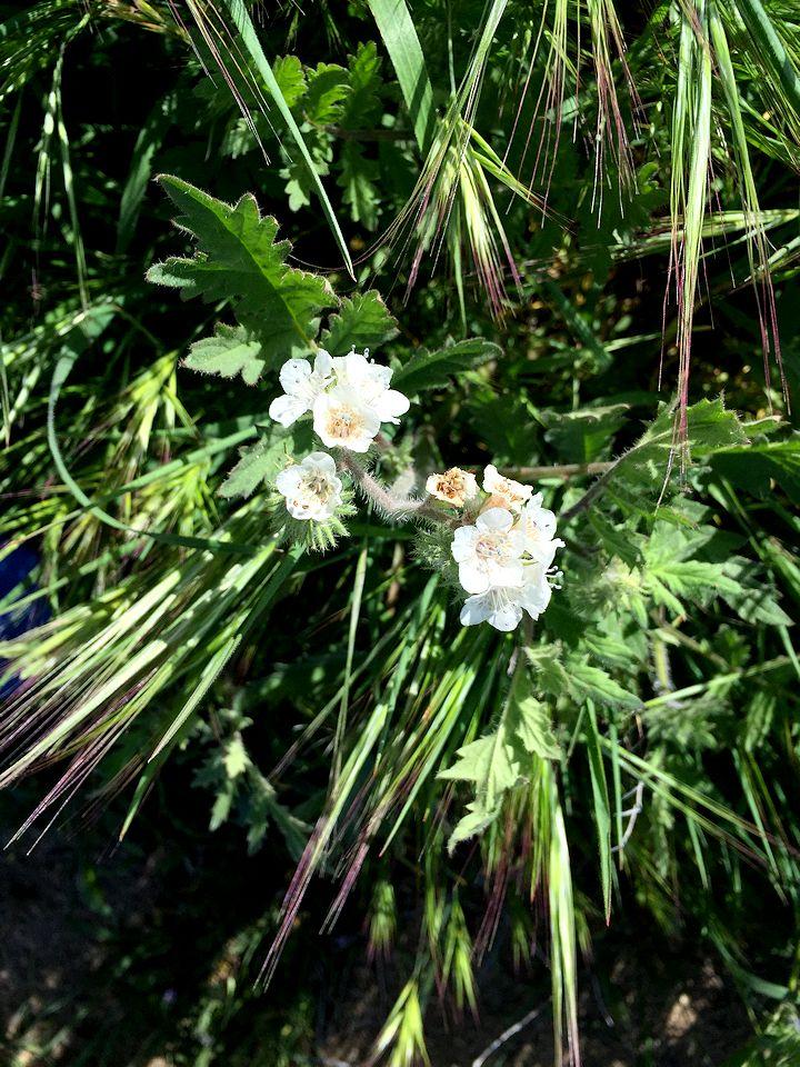wildflower 16